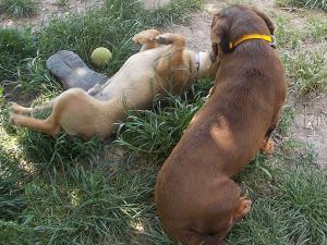 kutya-orokbefogadas-hajduszoboszlo-25