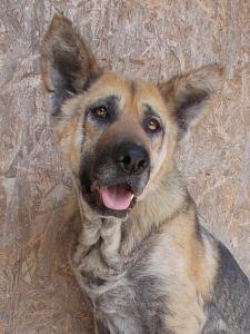 kutya-orokbefogadas-hajduszoboszlo-6