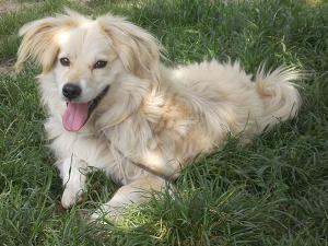 kutya-orokbefogadas-hajduszoboszlo-7