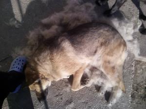 kutya-orokbefogadas-hajduszoboszlo-2017-oktober-10