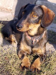kutya-orokbefogadas-hajduszoboszlo-2017-oktober-104