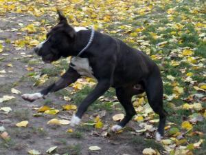 kutya-orokbefogadas-hajduszoboszlo-2017-oktober-111