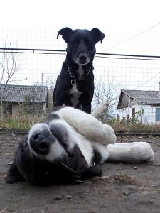 kutya-orokbefogadas-hajduszoboszlo-2017-oktober-113