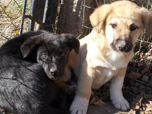 kutya-orokbefogadas-hajduszoboszlo-2017-oktober-118