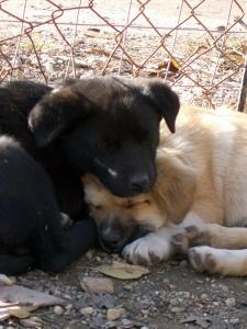 kutya-orokbefogadas-hajduszoboszlo-2017-oktober-126
