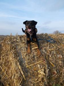 kutya-orokbefogadas-hajduszoboszlo-2017-oktober-13
