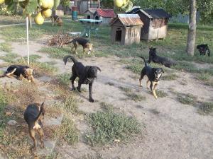kutya-orokbefogadas-hajduszboszlo-menhely-2017-szeptember-1