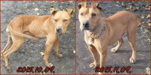 Zeusz-dog-adoption-then and now