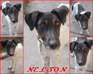 Adopted dog in Hungary_Nelson_1