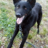kutya-menhely-örökbefogadás-hajdúszoboszló-gazdikeresők-démon-3