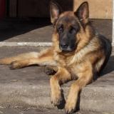 kutyamenhely-allatmenhely-kutya-orokbefogadas-hajduszboszlo-10