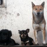 kutyamenhely-allatmenhely-kutya-orokbefogadas-hajduszboszlo-11