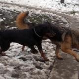kutyamenhely-allatmenhely-kutya-orokbefogadas-hajduszboszlo-30