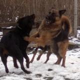 kutyamenhely-allatmenhely-kutya-orokbefogadas-hajduszboszlo-36