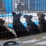 kutyamenhely-allatmenhely-kutya-orokbefogadas-hajduszboszlo-37