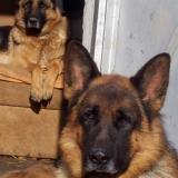 kutyamenhely-allatmenhely-kutya-orokbefogadas-hajduszboszlo-41