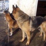 kutyamenhely-allatmenhely-kutya-orokbefogadas-hajduszboszlo-13