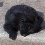 kutyamenhely-allatmenhely-kutya-orokbefogadas-hajduszboszlo-22