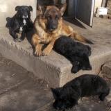 kutyamenhely-allatmenhely-kutya-orokbefogadas-hajduszboszlo-23