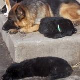 kutyamenhely-allatmenhely-kutya-orokbefogadas-hajduszboszlo-25