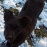 kutyamenhely-allatmenhely-kutya-orokbefogadas-hajduszboszlo-28