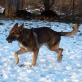 kutyamenhely-allatmenhely-kutya-orokbefogadas-hajduszboszlo-29
