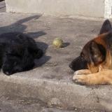 kutyamenhely-allatmenhely-kutya-orokbefogadas-hajduszboszlo-3