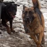 kutyamenhely-allatmenhely-kutya-orokbefogadas-hajduszboszlo-35