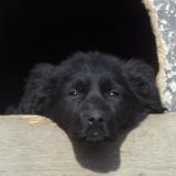 kutyamenhely-allatmenhely-kutya-orokbefogadas-hajduszboszlo-38