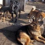 kutyamenhely-allatmenhely-kutya-orokbefogadas-hajduszboszlo-4
