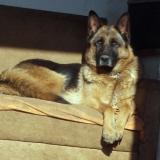 kutyamenhely-allatmenhely-kutya-orokbefogadas-hajduszboszlo-40
