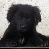 kutyamenhely-allatmenhely-kutya-orokbefogadas-hajduszboszlo-44