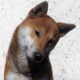 kutyamenhely-allatmenhely-kutya-orokbefogadas-hajduszboszlo-46