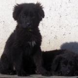 kutyamenhely-allatmenhely-kutya-orokbefogadas-hajduszboszlo-48