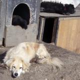 kutyamenhely-allatmenhely-kutya-orokbefogadas-hajduszboszlo-5