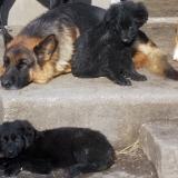 kutyamenhely-allatmenhely-kutya-orokbefogadas-hajduszboszlo-6