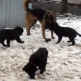 kutyamenhely-allatmenhely-kutya-orokbefogadas-hajduszboszlo-8