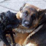 menhely-kutya-orokbefogadas-hajduszoszlo-2018-marcius-105