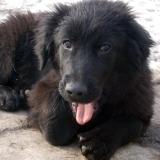 menhely-kutya-orokbefogadas-hajduszoszlo-2018-marcius-11