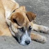 menhely-kutya-orokbefogadas-hajduszoszlo-2018-marcius-119