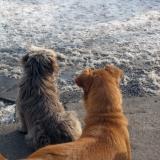 menhely-kutya-orokbefogadas-hajduszoszlo-2018-marcius-37