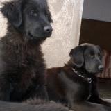 menhely-kutya-orokbefogadas-hajduszoszlo-2018-marcius-40