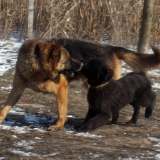 menhely-kutya-orokbefogadas-hajduszoszlo-2018-marcius-42