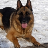 menhely-kutya-orokbefogadas-hajduszoszlo-2018-marcius-47