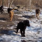 menhely-kutya-orokbefogadas-hajduszoszlo-2018-marcius-65