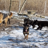menhely-kutya-orokbefogadas-hajduszoszlo-2018-marcius-68
