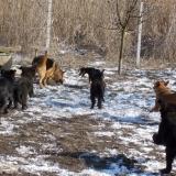 menhely-kutya-orokbefogadas-hajduszoszlo-2018-marcius-69
