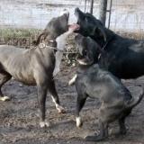 orokbefogadhato-kutyak-hajduszoboszlo-12