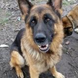 orokbefogadhato-kutyak-hajduszoboszlo-20
