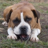 orokbefogadhato-kutyak-hajduszoboszlo-23